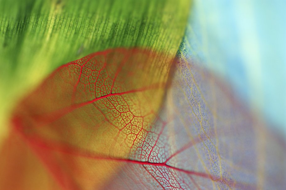 109629 leaves veins bokeh blue red green p