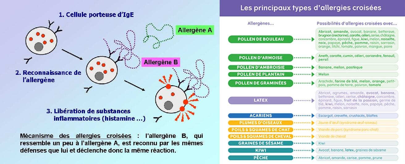 Img allergiescroisees1 orig