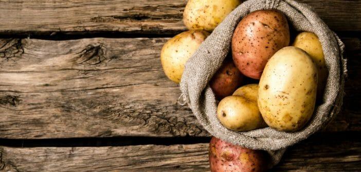 La pomme de terre a t elle un effet coupe faim 702x336