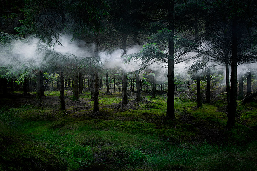 Surreal forest photograhy ellie davis 13 880