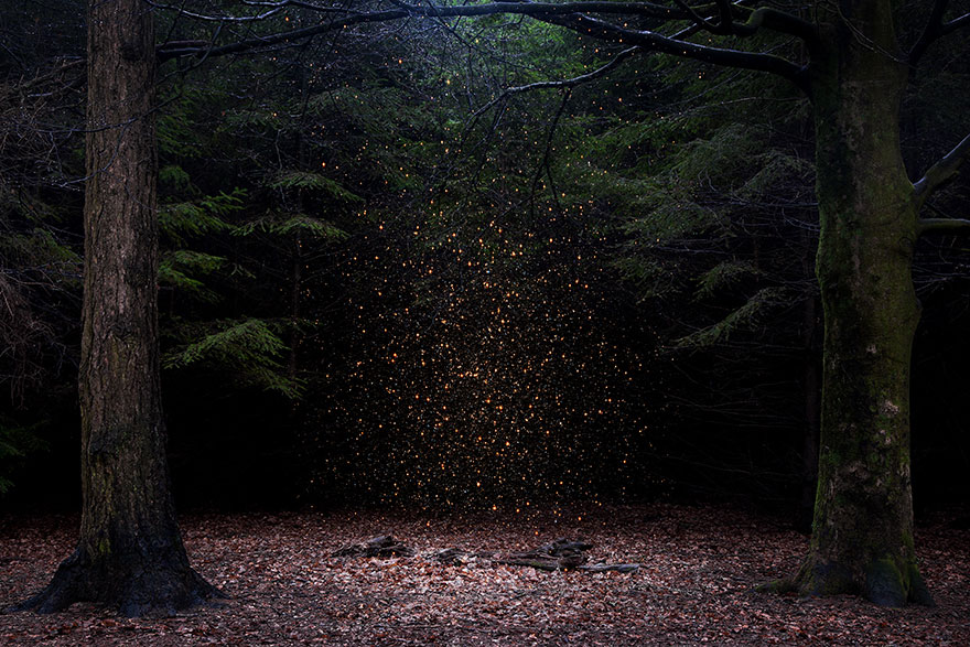 Surreal forest photograhy ellie davis 7 880